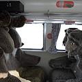 JR 旭山動物園號 (50)