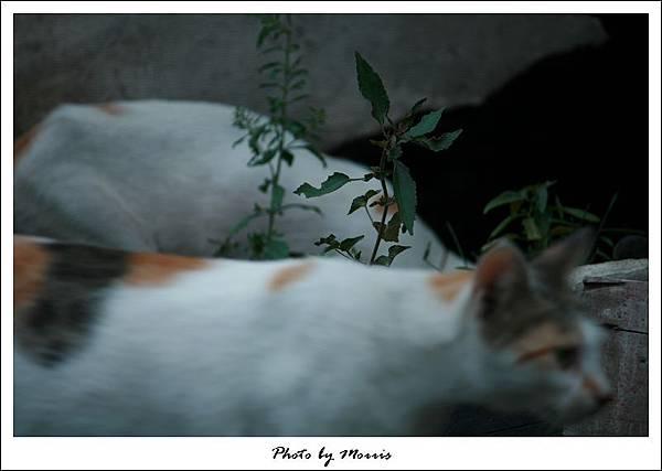 流浪貓悲歌 (05).jpg