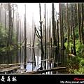 迷幻‧忘憂森林.jpg