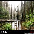 迷幻‧忘憂森林 (01).jpg