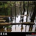 迷幻‧忘憂森林 (03).jpg