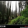迷幻‧忘憂森林 (04).jpg