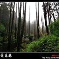 迷幻‧忘憂森林 (05).jpg