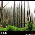 迷幻‧忘憂森林 (06).jpg