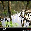 迷幻‧忘憂森林 (07).jpg
