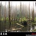 迷幻‧忘憂森林 (08).jpg