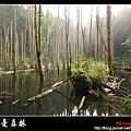 迷幻‧忘憂森林 (09).jpg