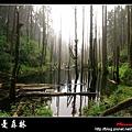 迷幻‧忘憂森林 (24).jpg