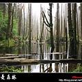 迷幻‧忘憂森林 (27).jpg