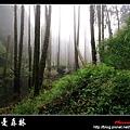 迷幻‧忘憂森林 (29).jpg