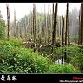 迷幻‧忘憂森林 (33).jpg