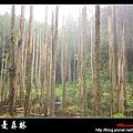 迷幻‧忘憂森林 (34).jpg
