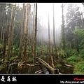 迷幻‧忘憂森林 (35).jpg