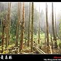 迷幻‧忘憂森林 (38).jpg