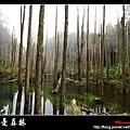 迷幻‧忘憂森林 (40).jpg
