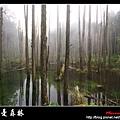 迷幻‧忘憂森林 (43).jpg