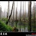 迷幻‧忘憂森林 (48).jpg