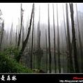 迷幻‧忘憂森林 (49).jpg