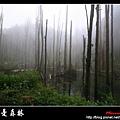 迷幻‧忘憂森林 (51).jpg