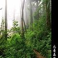 迷幻‧忘憂森林 (54).jpg