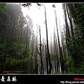 迷幻‧忘憂森林 (56).jpg