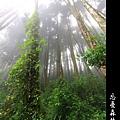 迷幻‧忘憂森林 (57).jpg
