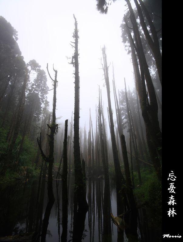 迷幻‧忘憂森林 (58).jpg