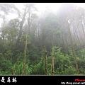 迷幻‧忘憂森林 (59).jpg