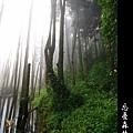 迷幻‧忘憂森林 (61).jpg