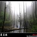 迷幻‧忘憂森林 (63).jpg