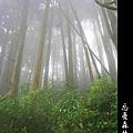 迷幻‧忘憂森林 (64).jpg