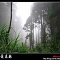 迷幻‧忘憂森林 (65).jpg