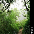 迷幻‧忘憂森林 (66).jpg