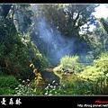 夢幻‧忘憂森林 (05).jpg