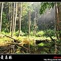 夢幻‧忘憂森林 (10).jpg