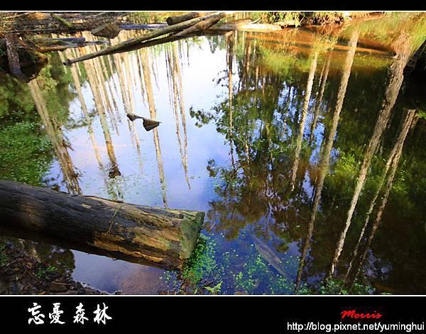 夢幻‧忘憂森林 (17).jpg