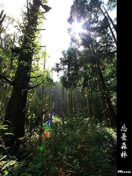 夢幻‧忘憂森林 (22).jpg