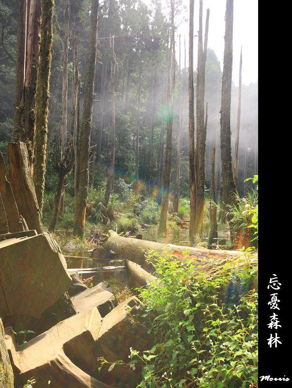 夢幻‧忘憂森林 (25).jpg