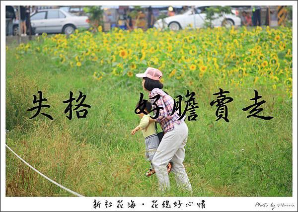 97新社花海 (65).JPG
