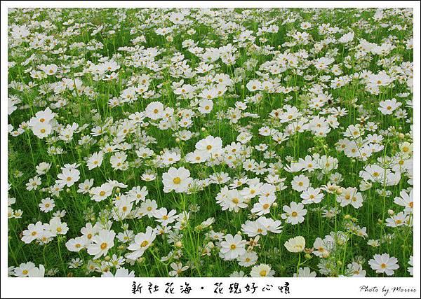 97新社花海.JPG