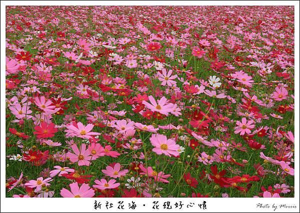 97新社花海 (07).JPG