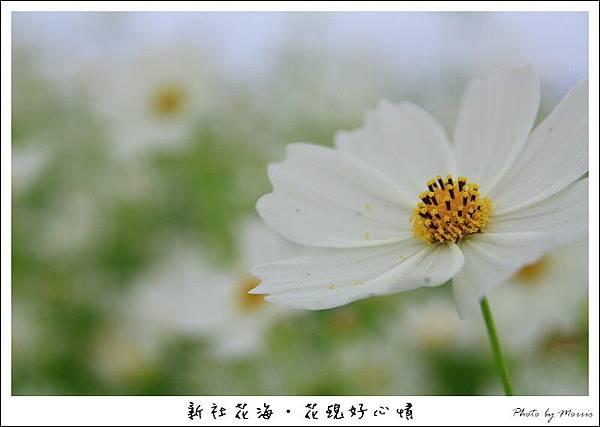 97新社花海 (11).JPG