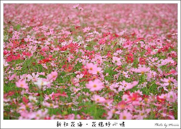 97新社花海 (39).JPG