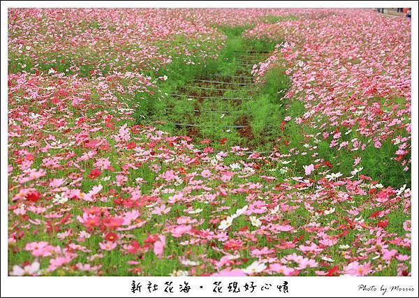 97新社花海 (40).JPG