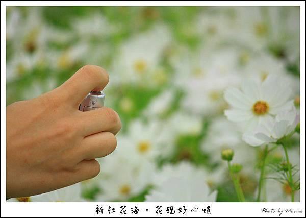 97新社花海 (59).JPG