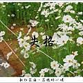 97新社花海 (64).JPG