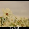 褪色‧新社花海 (02).JPG