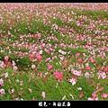 褪色‧新社花海 (04).JPG