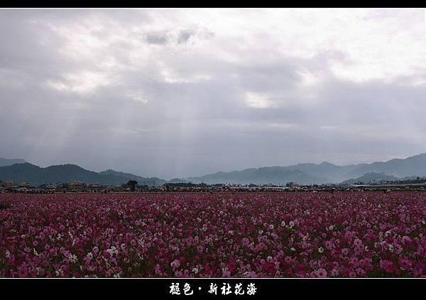 褪色‧新社花海 (05).JPG