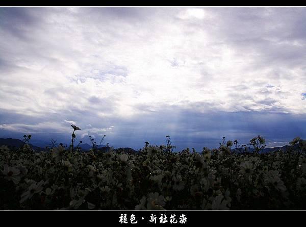 褪色‧新社花海 (08).JPG